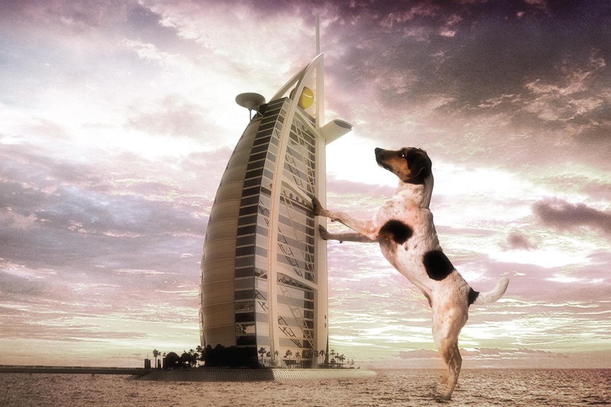 Dog-Al-Arab